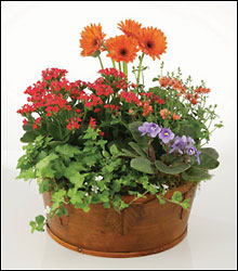 European Garden in wicker basket