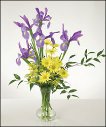 Fresh vase of Iris and yellow daisies