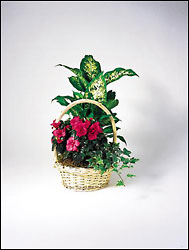 European Garden in wicket basket