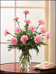 1 Dozen Carnations arranged in vase